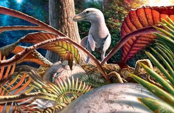 Az első magyarországi dinoszaurusz-tojás leletek