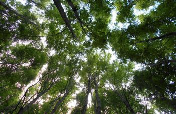 A Kékes növényzeti változásai az elmúlt 15000 évben